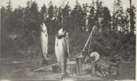 Fish caught in the Saanich Inlet by Albert Whitehead