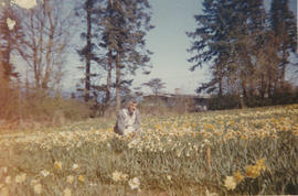 John Harold Woods, daffodil farm on Ash Road, 1965