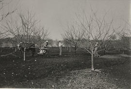 Borden orchard, spraying fruit trees