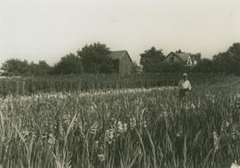 Aitkens family house and barn with Francis Edwin Aitkens in field