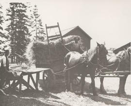 Hayrack on Rogers' farm, 1920