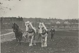Team of horses cultivating on the Borden farm