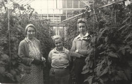 Creed's greenhouse workers, Mrs. Ella Creed, Mrs Parks (tomato packer) and June Rosson, 1940s