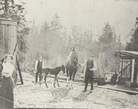 Martin, Fred and Mrs Mallett with horses, Ruby Road