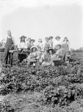Berry pickers on the Aitkens farm in Gordon Head