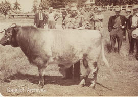 Jim Turner with his shorthorn bull, 1904