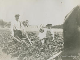 C.F. Dawson and two of his children ploughing at Rose Bank farm