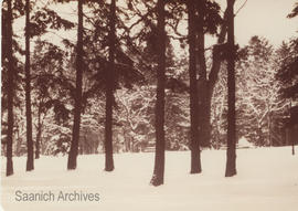 Beacon Hill Park in the snow in the early 1900s