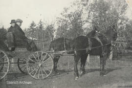 George McMorran Sr. and Alex [McMorran] in horse-drawn buggy, 1904