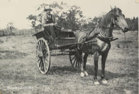 George McMorran Sr. delivering milk in Mount Tolmie area, 1901