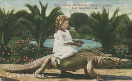 Child riding alligator, California Alligator Farm, Los Angeles