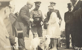 Postcard of Muggins the Red Cross dog and the Prince of Wales, with young Doris Baker presenting ...
