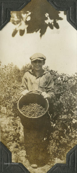 Horace Dawson picking loganberries