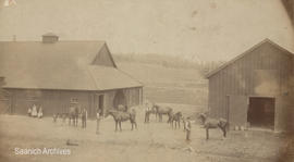 Broadmead farm employees with horses and foals, 1893