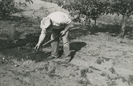 Leslie H.P. Underwood working in garden at 5424 Fowler Road