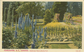 Delphinium Time in Stanley Park, Vancouver