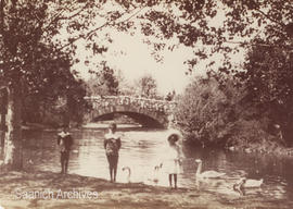 Children with swans in Beacon Hill Park, 1904