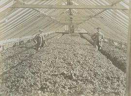 Henry Josias Dunn and Russell [Hophine] inside greenhouse