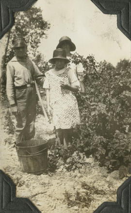 Irvine, Barbara and Irene Dawson loganberries