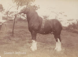 Archie Brown with horse, 1907