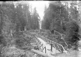 Bridge in forest [at logging operation?]