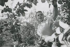 Joyce Lytton thinning apples in Kelowna