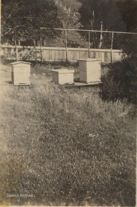 Beehives, McMorran property, Pear Street and Cedar Hill Road